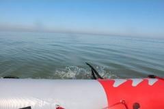 Opale longe cote nage avec palmes (228)