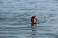 Opale longe cote nage avec palmes (39)